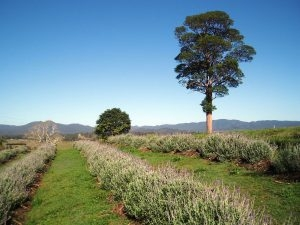 country getaway qld